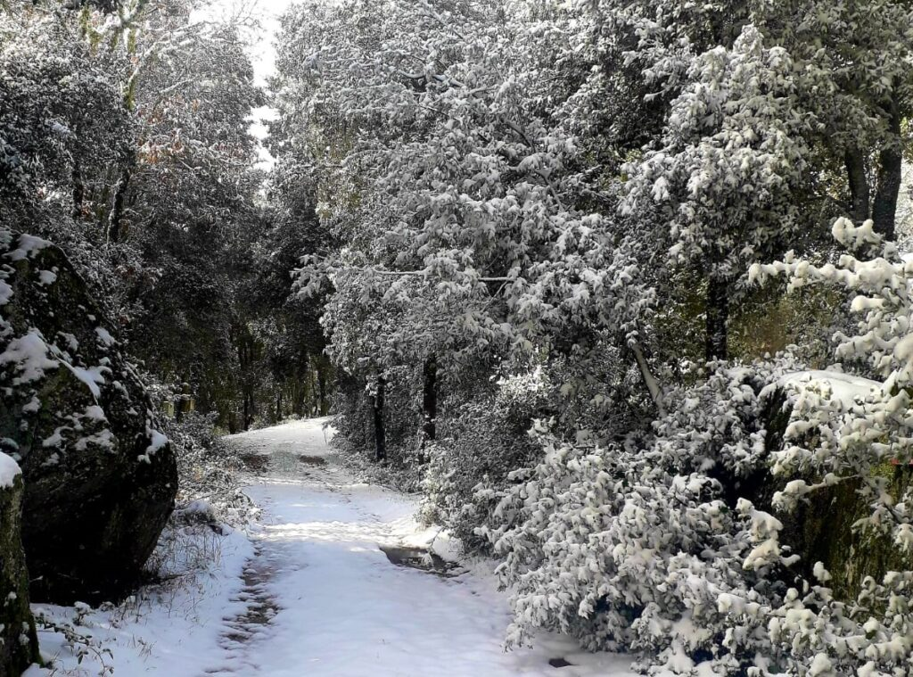 Ollolai Neve